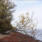 Herbst, Bäume, Sträucher, Elbufer, Elbe, Ast, Blätter