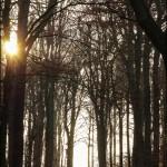 Mann der aus dem Märchenwald ins Licht tritt